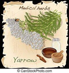 yarrow., médico, herb.