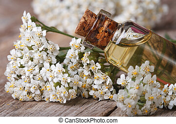 Yarrow oil in the bottle close-up horizontal - Yarrow oil in...