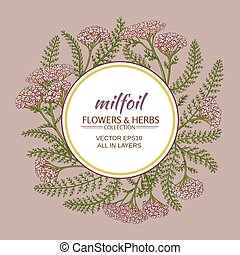 yarrow vector frame - yarrow flowers vector frame on color ...