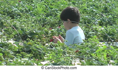 years old picking strawberries