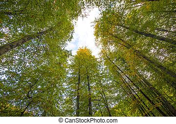 yedigoller Park, bolu - autumn landscape in (seven lakes) ...