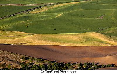 Yellow Airplane Green Wheat Fields Palouse Washington State
