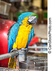 Yellow and blue macaw at Yuen Po Street bird market, Hong Kong