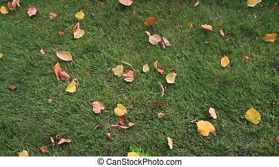 yellow and embroidered leaves on the green lawn