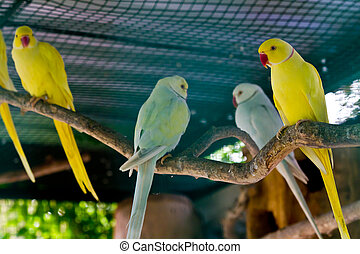 Yellow and green macaw red beak - Yellow and green macaw...
