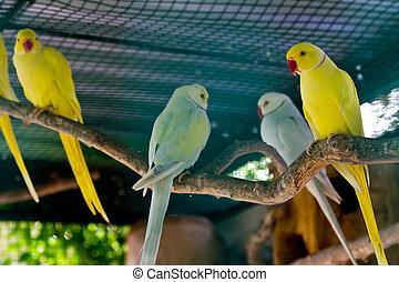 Yellow and green macaw red beak