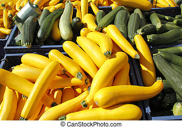 Yellow and green squash for sale. - Many yellow and green...