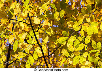 Yellow and Orange Autumn Leaves as Background