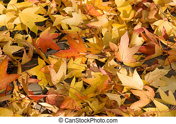 Yellow and orange autumn leaves in fall