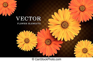 yellow and orange calendula flower elements, transparent background