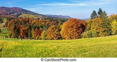 trees on autumn meadow in mountains