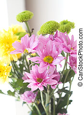 flowers in white background