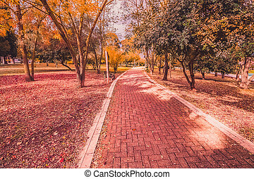 yellow and purple colorful leaves autumn colors in the park outdoor with tree and road
