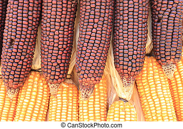dried corn bundle together texture