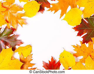 yellow and red autumn leaves for copyspace, decorative conceptual autumn frame