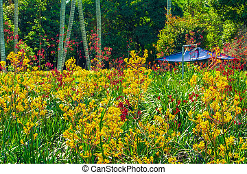 Yellow and red flowers in the grass