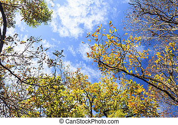 Yellow and red foliage tree on blue sky background.