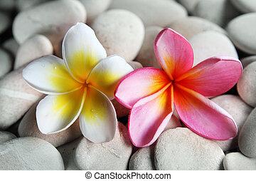 Yellow and red frangipani on pebbles