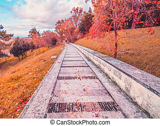 yellow and red purple colorful leaves and tree autumn colors in the park outdoor with a road