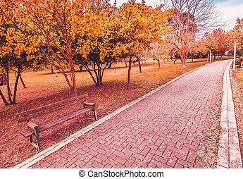 yellow and red purple colorful leaves autumn colors in the park outdoor with a road and wood bench