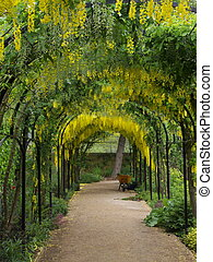 Yellow flowers on an archway in kew gardens