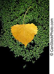 Yellow Aspen Leaf, Moss