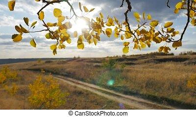 Yellow aspen road sunlight leaves against forest the blue...