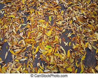 Yellow autumn dry leaves on gray asphalt