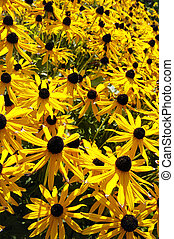 Yellow autumn flowers
