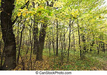 yellow autumn foliage