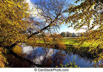 yellow autumn in forest over river in Drenthe, Netherlands