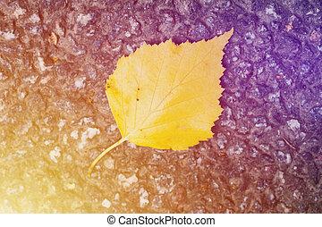 Yellow autumn leaf background.