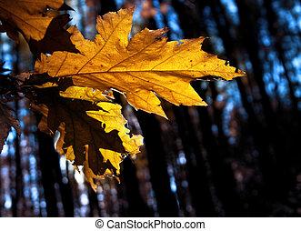 yellow autumn leaf