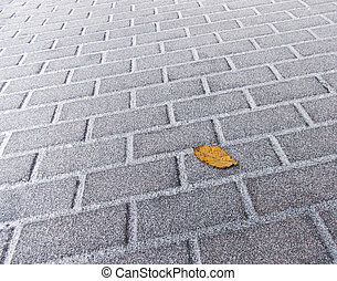 Yellow autumn leaf lying on a snowy pavement