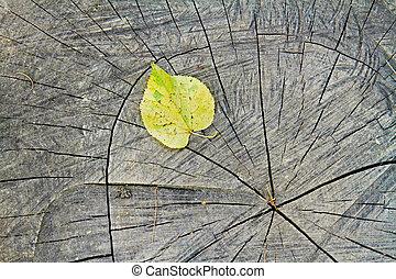 Yellow autumn leaf on a tree stump