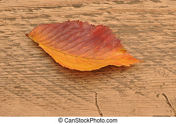 yellow autumn leaf on wooden background