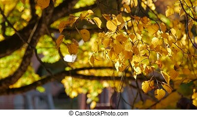 Yellow autumn leaf swaying in the wind. Rays of the sun...