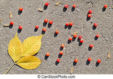 Yellow autumn leaves and red berries on asphalt