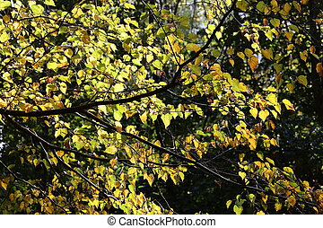 Yellow autumn leaves in sunlight in forest