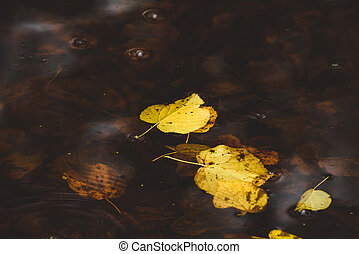 Yellow autumn leaves in the dark water in the fall floating...