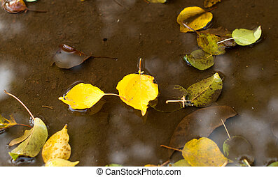 yellow autumn leaves in the water