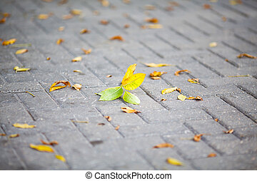yellow autumn leaves on a paving stone of a street close-up