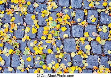 Yellow autumn leaves on a square tile in the city.
