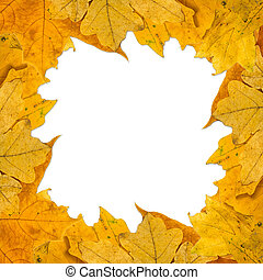 yellow autumn leaves on a white background