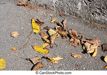Yellow autumn leaves on asphalt in sunlight