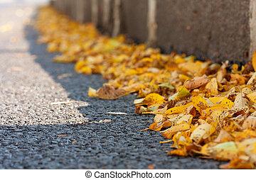 Yellow autumn leaves on asphalt