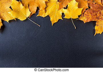 Yellow autumn leaves on black chalkboard background