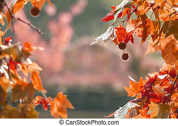 yellow autumn leaves on blurred background copyspace