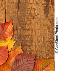 yellow autumn leaves on old wood