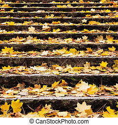 autumn leaves on stair